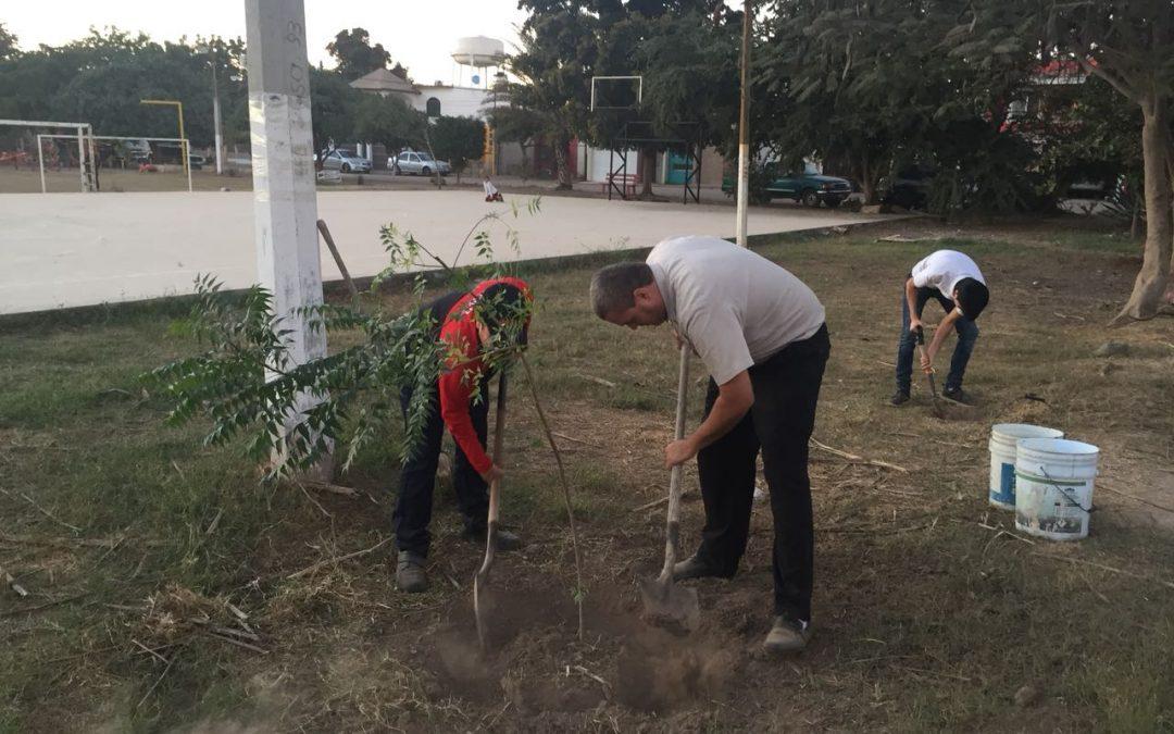 Návola Restaurant lleva a cabo una campaña de reforestación
